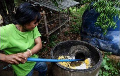 Thai village uses poop to power homes